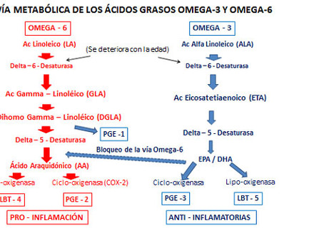 Omega-3 y Omega-6: el obligado equilibrio