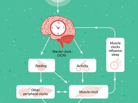 Insomnio y ejercicio muscular
