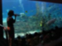 釜山アクアリウム SEA LIFE Busan Aquarium