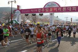 慶州桜マラソン大会
