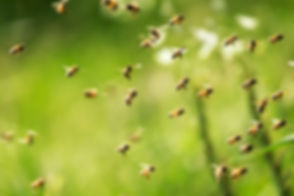 Bee Control.jpg