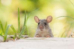 Rodent Control (2).jpg