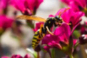 Wasp Control.jpg