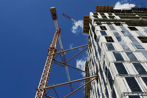 Crane Close Up 2