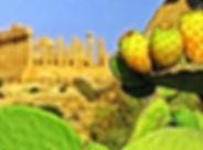 sicilia fichi d.jpg