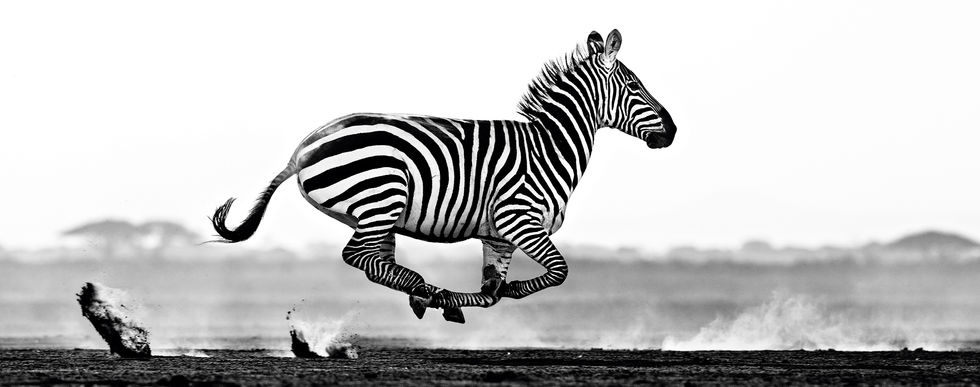 Desert Flight – Amboseli, Kenya