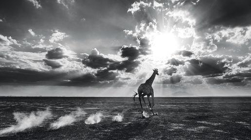 Heaven Can Wait II – Amboseli, Kenya