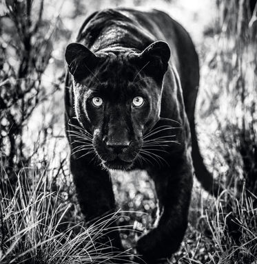 Wakanda – South Africa