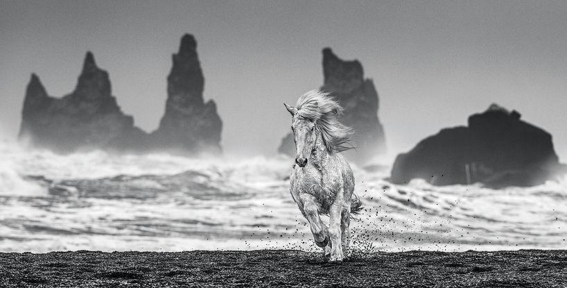 White Horses – Iceland