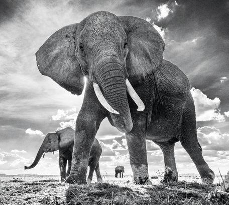 The Untouchables II – Amboseli, Kenya