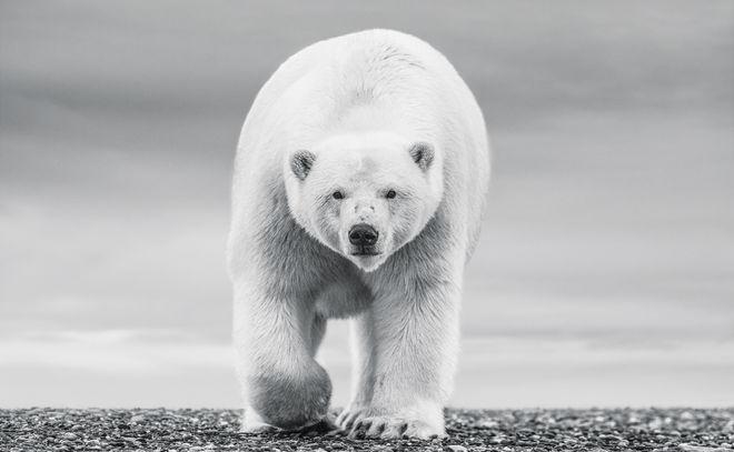 The North Slope – Alaska