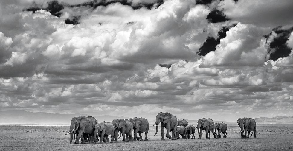 The Waterboys – Amboseli, Kenya