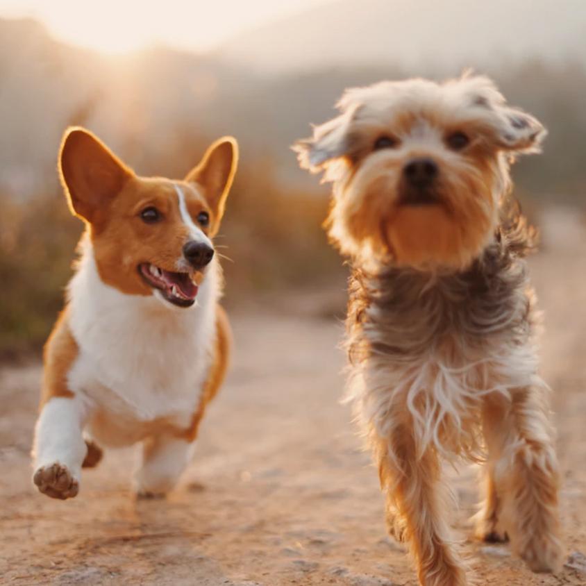 Cuccioli e simpatia - le interazioni dedicate ai più giovani