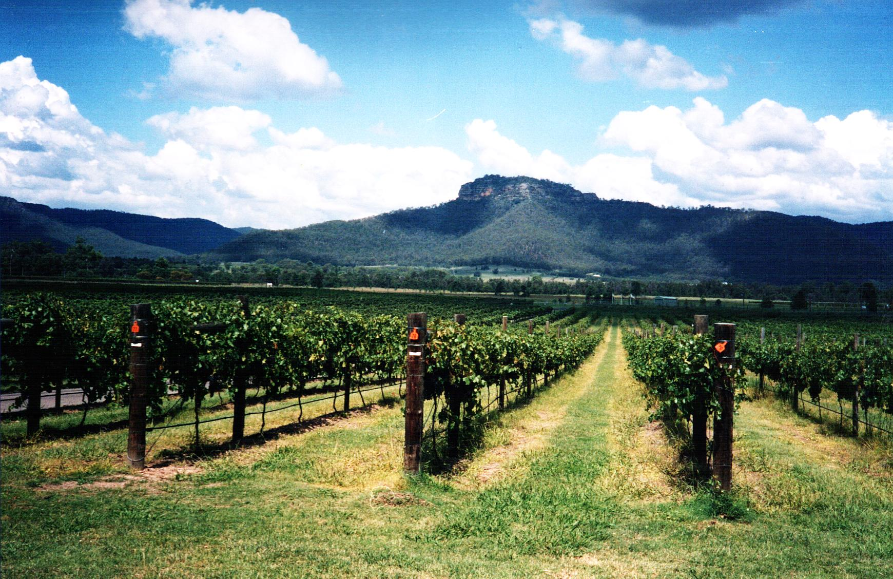 Hunter vineyard