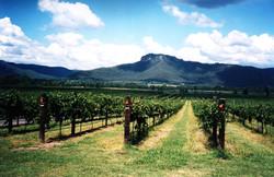 Hunter vineyard