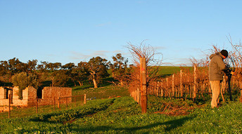 Gaia Vineyard