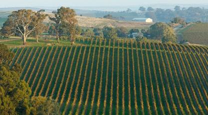 Springvale Vineyard