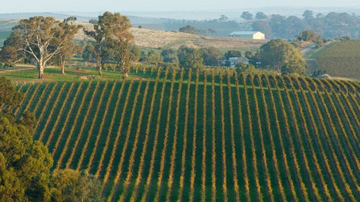 Springvale Vineyard