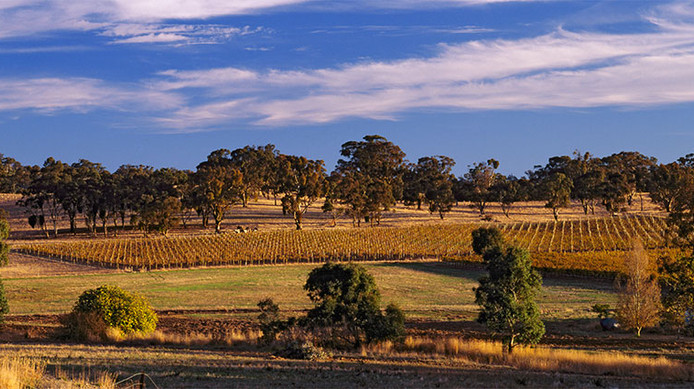 Polish Hill Vineyard