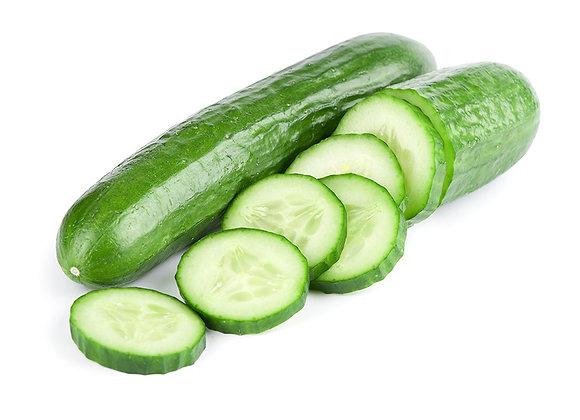 Plant de concombre