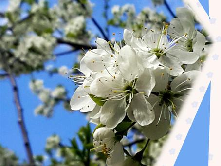 Цветущий май!
