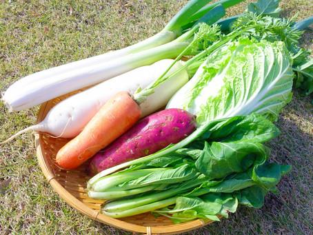 旬の野菜を食べるメリットは?【秋冬編】