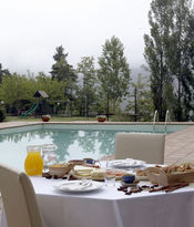 Breakfast among fir trees