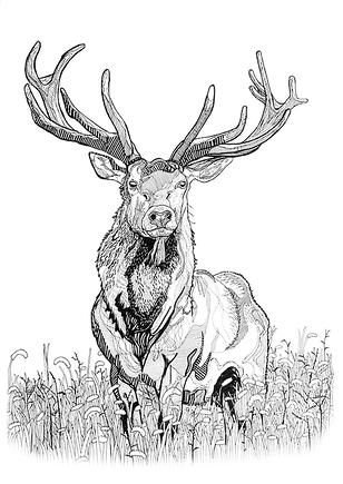 Drawing Deer.png