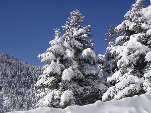 CMH_Winter_14.JPG