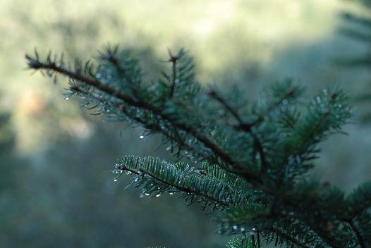 CMH Forest 18.JPG