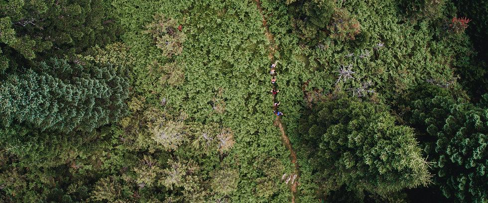 Deer Path Forest.jpg