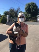 Pet Transport - Happy Dog Goes Home