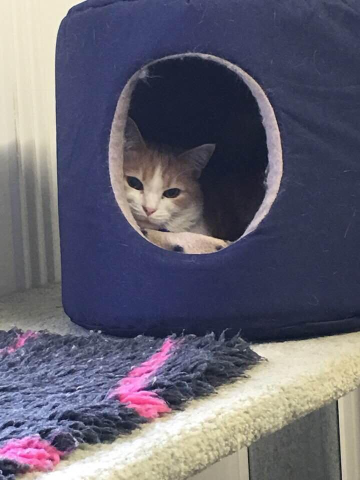A Happy Cat in our Cattery