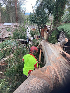 Country to Coast Tree Services Storm Tree Fall and Storm Damage 3.jpg