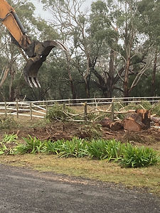 Country to Coast Tree Services Land Management 4.jpg