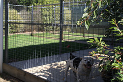 Shady Dog Boarding Kennel with Green Grass For Happy Dogs