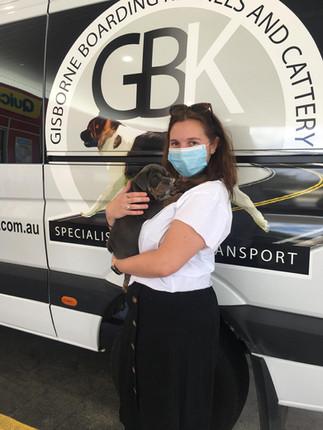 Puppy Transport