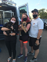 Pet Transport - A Great Future Together