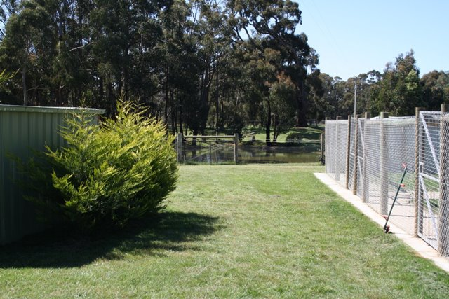 Gisborne Dog Boarding Kennel's Manicured Lawns and Garden