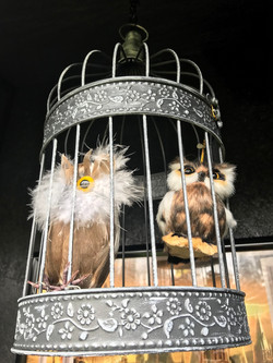 Two caged owls