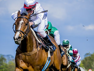 Thoroughbreds racing for the finish..jpg