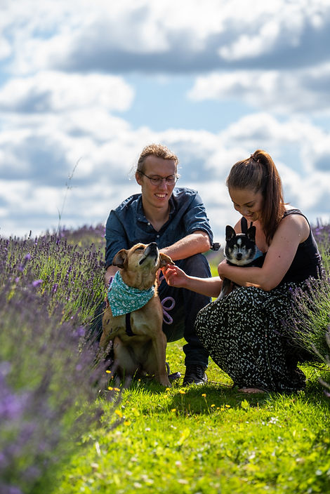 Laura & Luke with their dogs in a lavender field