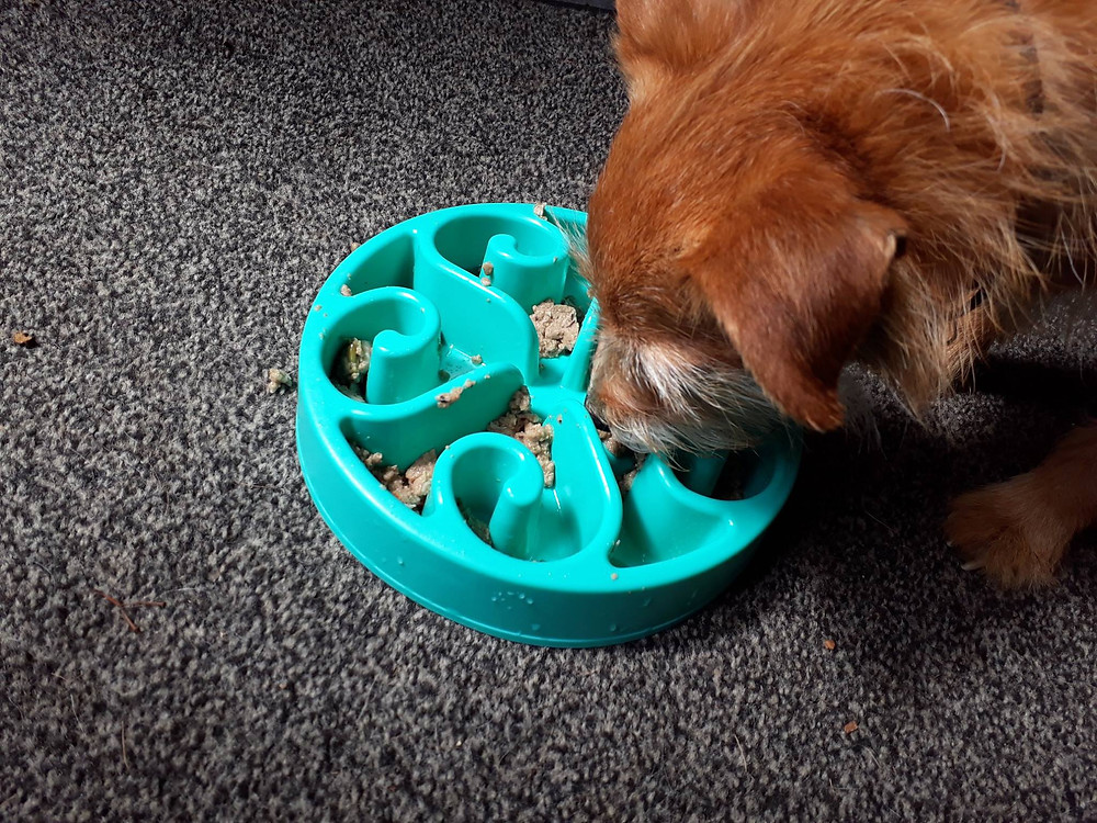 Dog eating from bowl.