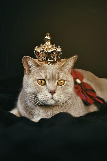 queen cat.jpg