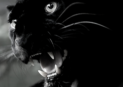 panther postcard size BW.png