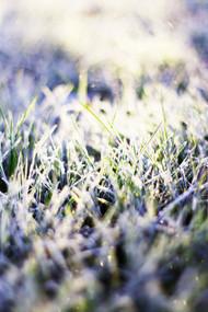 Frost i gresset