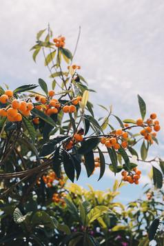 Nerja - Citrus