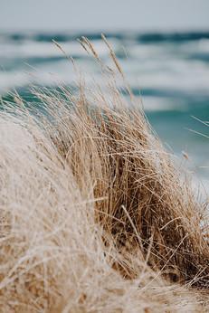Skagen - strå i vinden