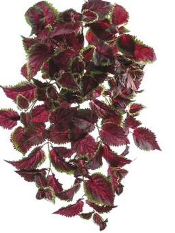 Coleus bush UV