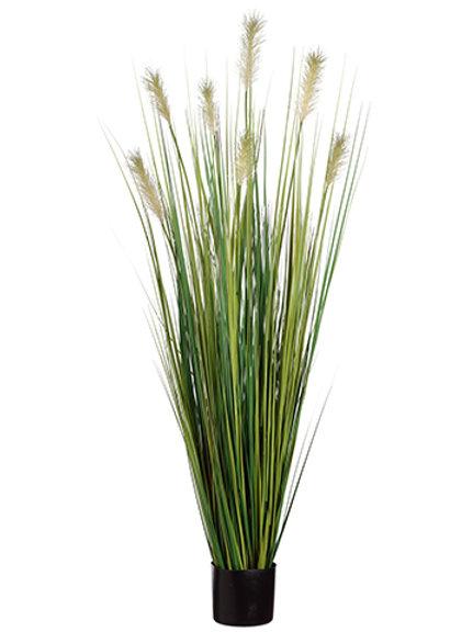 Grass Pampas